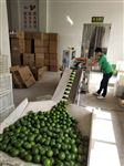 广州柠檬打包机