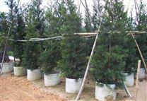 植树袋采用纤维无纺布