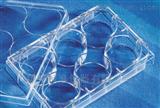 6 12 24 48 96孔康寧Corning 細胞培養板