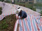 出售聚丙烯单膜彩条布每平米报价