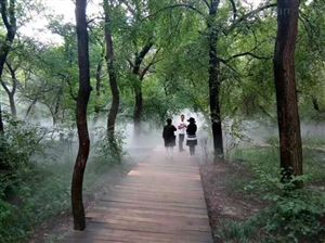供应园林景观喷雾造景设备
