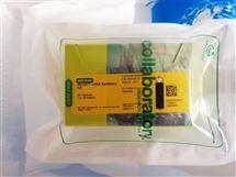 Bio-Rad伯乐iScript cDNA合成试剂盒1708890