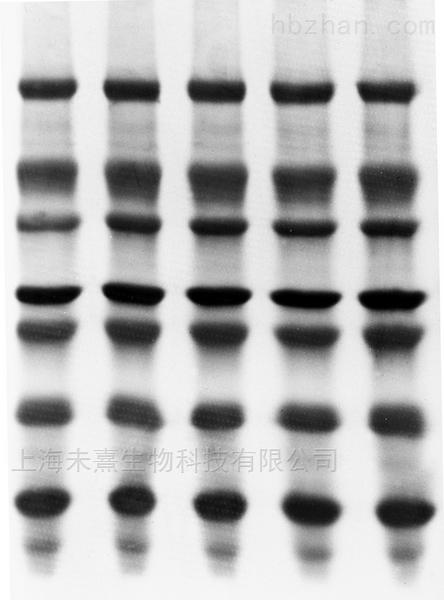 密理博PVDF转印膜 孔径0.22um
