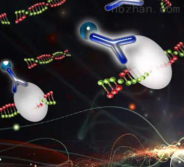 染色质免疫共沉淀实验