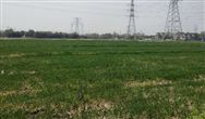 《天津市土壤污染防治条例(草案)》(征求意见稿)公开征求意见的通知
