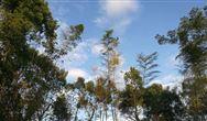 河南:《水泥行業大氣污染物排放標準》(征求意見稿)