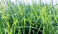 江苏:关于完善差别化电价政策促进绿色发展的通知
