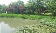 二沉池在污水處理中的作用!