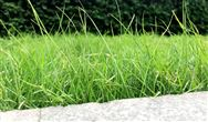 又到污泥换季膨胀的季节!你的污泥还好吗?