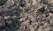 运行中如何选择合理的污泥浓度?(上)