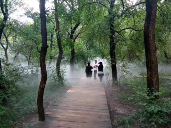 通遼大青溝國家森林公園