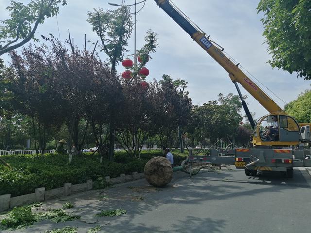 <b>江苏省滨海县城管局集聚要素提升城区绿化品质,生活垃圾,园林绿化,绿化带</b>