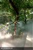大青沟国家森林公园人造雾降温设备